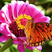 Butterfly Treat Art Print