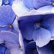 Butterfly Wing Blue Flowers Art Print