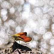 Butterfly With Bokeh Light Art Print