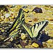 Butterlies At The Beach Art Print