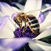 Buzz Wee Bees Art Print