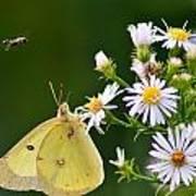 Buzzed Butterfly Art Print