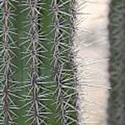 Cabo Cacti Before Art Print