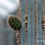 Cactus 17 Art Print