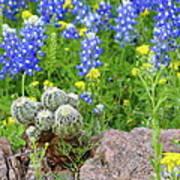 Cactus And Bluebonnets 2am-28694 Art Print