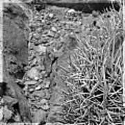 Cactus And Rocks Art Print