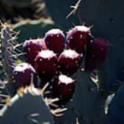 Cactus Bud Art Print