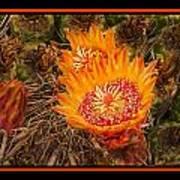 Cactus Flower 3 Art Print