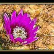 Cactus Flower 4 Art Print