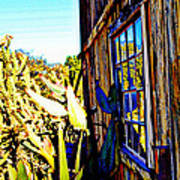 Cactus Reflection Art Print