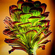 Cactus Time Art Print