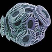 Calcareous Phytoplankton, Sem Art Print by Steve Gschmeissner