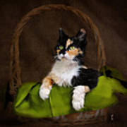 Calico Cat In Basket Art Print
