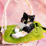 Calico Kitty In Basket Art Print