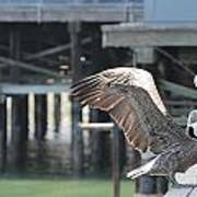 California Brown Pelicans 2 Art Print