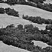 California Hillside Oaks Art Print