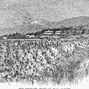 California: Vineyard, 1889 Art Print by Granger