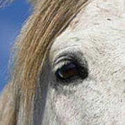 Camargue Horse Equus Caballus Eye Art Print