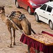 Camel Ready To Take Tourists For A Desert Safari Art Print