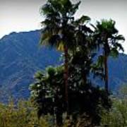 Camelback Beyond The Palms Art Print