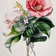 Camellia And Broom Art Print by Marie-Anne