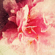 Camellia Flower With Music Art Print