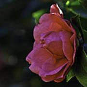 Camellia Twenty-five  Art Print