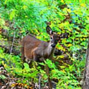 Can I Help You My Deer Art Print