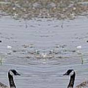 Canadian Goose Symmetry Art Print