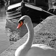 Canal Swan Art Print