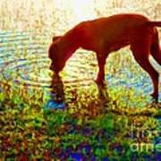 Canelo Drinking Water By The Lake Art Print