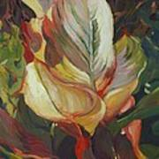 Canna In Light Art Print by Elizabeth Taft