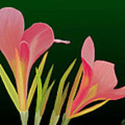 Canna Lilly Whimsy Print by Rand Herron