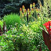 Canna Lily Garden Art Print by Gretchen Wrede