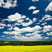 Canola Field, Brookfield, Prince Edward Art Print