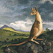 Captain Cook: Kangaroo, 1773 Art Print