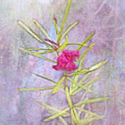 Captured Blossom Art Print