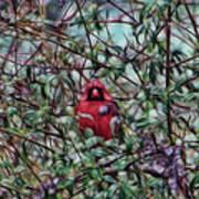 Cardinal Feb 2012 Art Print
