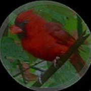 Cardinal Ring Art Print