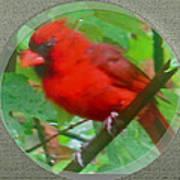 Cardinal Rings Art Print