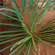 Carpet Beetle Larval Hairs, Sem Art Print