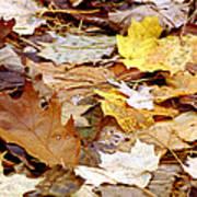 Carpet Of Leaves Art Print