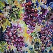 Cascade Art Print by Ann  Nicholson