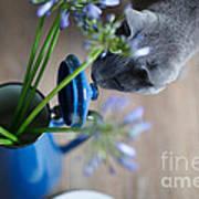 Cat And Flowers Art Print