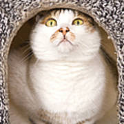 Cat From Cats House Art Print