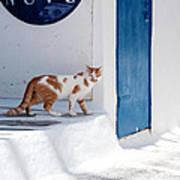 Cat In Mykonos Art Print