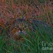 Cat In The Grasses Art Print