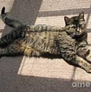 Cat Life Art Print