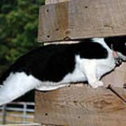 Cat Looking Thru The Knot Hole Art Print
