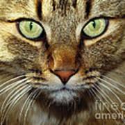 Cat Named Hooch Art Print